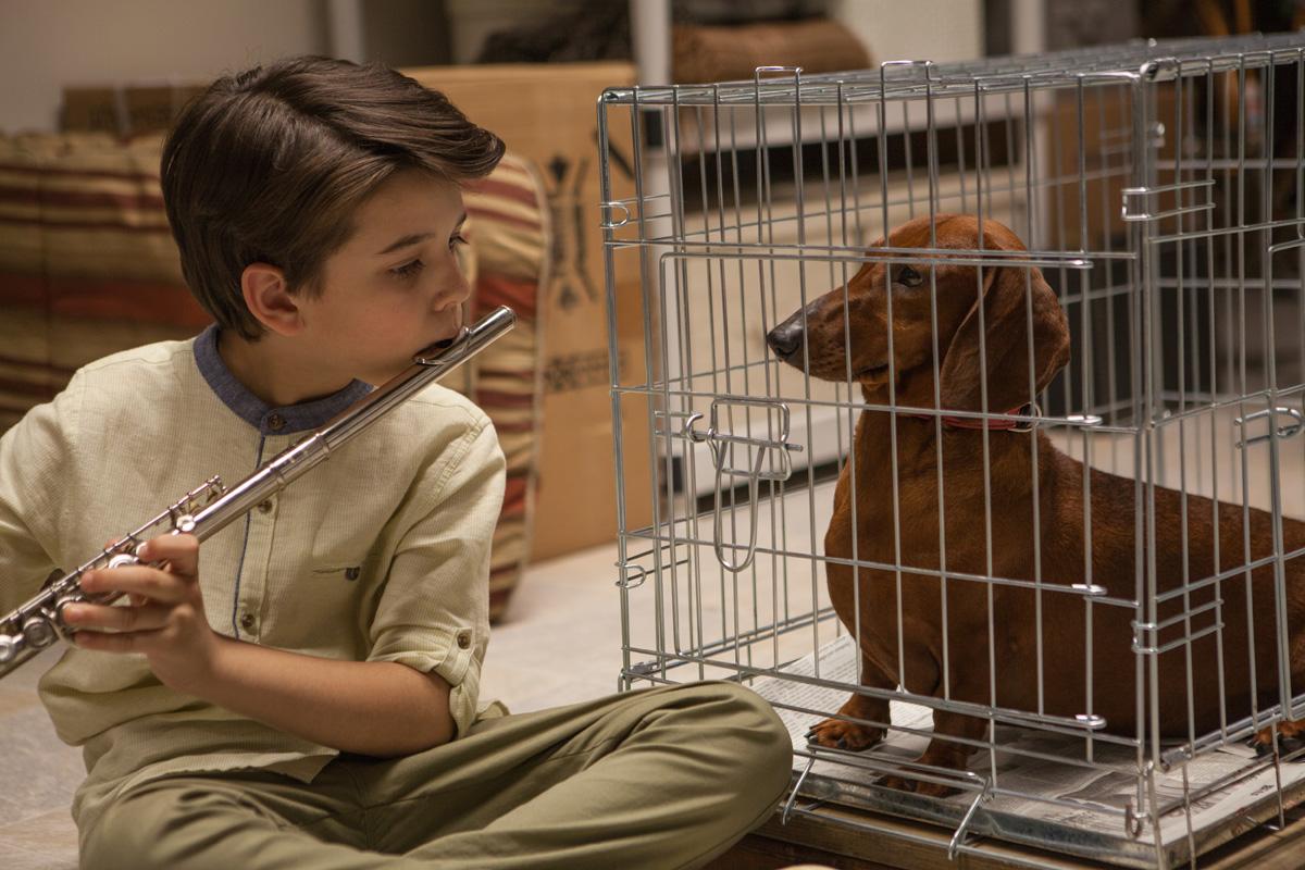 11_Web Exclusive_Premiers_Wiener-Dog_Photo by Linda Kallerus